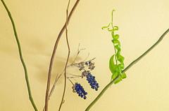 Ornamental 3 (Fiddling Bob) Tags: green ornamental branches berries twigs greenery m42 oldlenses supertakumar10528 vintagelens manualfocuslenses yellow
