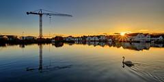 """Afternoon swim"" (Vest der ute) Tags: xt2 norway rogaland karmøy water waterscape sea seaside sunset sunstar swan crane houses boats reflections mirror afternoon winter serene sky bluesky fav25 fav200"