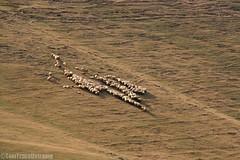 IMG_1326 (TomTravelExtreme) Tags: azerbejdżan azerbaijan azərbaycan kicik qafqaz kaukaz mountains