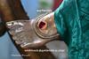 Kunchita Paadam (Kapaliadiyar) Tags: kapaliadiyar vaaleeswarartemple nataraja sivakamasundari mylapore mylaporetemple myilai