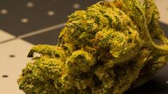 Gorilla Glue up close (soggymuppet62) Tags: weed kush 420 marijuana cannabis smokeweed blazedit ganja gorilla glue gg gorillaglue macro