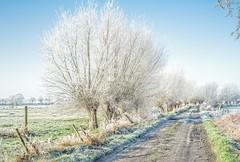 Winter in the Bruges wetlands (Roland B43) Tags: assebroeksemeersen bruges brugge schneiderkreuznachcurtagon35mm28