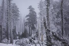 2018 Icy Forest (jeho75) Tags: sony rx100 zeiss deutschlandgermany harz mountains nebel fog eisig icy urwald forest winter landschaft landscape
