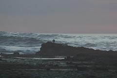 IMG_2960 (armadil) Tags: mavericks beach beaches californiabeaches scenic sunset