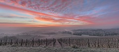 *Wittlicher Senke @ Wintermorgen-Panorama* (Albert Wirtz @ Landscape and Nature Photography) Tags: albertwirtz twilight bluehour blauestunde goldenhour goldenestunde dawn dusk moseleifel eifelmosel winterzauber wintermagic panoramic panorama hupperath wittlich weinberge vineyards rebstöcke reben riesling rieslingwein wine wineregion deutschland germany rheinlandpfalz rhinelandpalatinate wittlichersenke wittlichertal wittlichvalley travel reisen wandern hiking walking eifel südeifel eifelsteig raureif hoarfrost rimecovered moselberge mosellemountains nebel dunst fog mist misty dusty dunstig kälte frost frozen cold brume bruma niebla nebbia brouillard morgennebel morgenstimmung morningmood grauverlauffilter haidafilternd09soft morningsky morgenhimmel redsky redclouds pastell