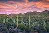 Saguaro Moonrise (Kirk Lougheed) Tags: arizona carnegieagigantea pimacounty saguaro saguaronationalpark saguarowest sonorandesert tucsonmountaindistrict usa unitedstates cactus desert landscape moon mountain nationalpark outdoor park plant sky sonoran sunset