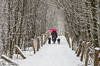 Gassi mit Schirm (hrolapp) Tags: schnee winter flensburg schleswigholstein deutschland de regenschirm schirm hunde gassi