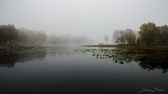 Crooked Lake Cloaked (D A Baker) Tags: crooked lake freshwater fog foggy mist moody mirror reflection lilypad weed trees cottage morning steaming northern indiana noble whitley
