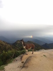 Holidays in Cusco (tierrasvivas) Tags: green travel trek trekkinginperu traintocuscotomachupicchu trektomachupicchu trektosalkantay salkantay salkantaytrekking sacredvalleyoftheincas holidays hikingtomachupicchu heaven hike how hiketheincatrail hiking choquequirao