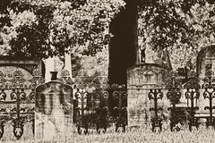 A Ghost In The Graveyard (Jim DeFazio) Tags: ghost spirit appartition femaleghost ladyghost scary spooky graveyard cemetery tombstones gravestones eerie haunted phantom supernatural spectral unearthly sepia