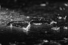 Shards of Ice (mclcbooks) Tags: ice frozen pond denverbotanicgardens winter colorado blackandwhite lowkey monochrome