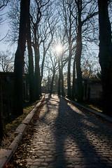 Paris - Le Père Lachaise - (Noir et Blanc 19) Tags: paris cimetière pèrelachaise allées arbres sony a77