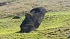 20171206_114405 (taver) Tags: chile rapanui easterisland isladepasqua summer samsunggalaxys6 dec2017 06122017 ranoraraku quary