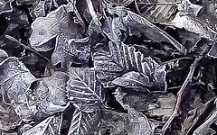 18-02-05 nah laub alt monochrom dsc01325-1 (ulrich kracke (many thanks for more than 1 Mill vi) Tags: diagonale laubalt monochrom nah raureif rispe stillleben textur