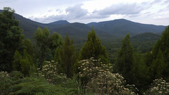 The Australian Bush (chappell.nancy -) Tags: mountain mountains hills trees bush native australia canberra landscape