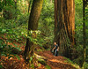 (CarbonNYC [in SF!]) Tags: portolaredwoods rob hole man redwood redwoodtree sneaky tree wood carbonnyc