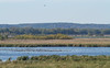 Dixon_JB_041_3186 (Joanne Bouknight) Tags: dixonwaterfowlrefuge hopperlake illinois observationtower thewetlandsinstitute viewfromobservationtower