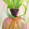 Happy Valentine's Day! (pixelarized) Tags: valentine tulip tulp bloemen flowers vaas vase pink roze