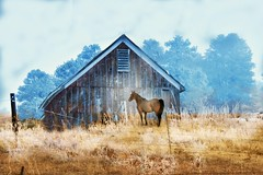 Out Of The Fog Into The Sun (Chamblin1) Tags: barn horse fog frost country winter colorado layering