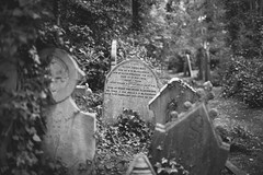 Highgate Cemetery sept 2014 (Lobe occipital) Tags: highgatecemetery highgate archway tombs tombes death mort cimetière cemetery london londoncemetery victoriancemetery 50mm 2014 blackandwhite bw bokeh