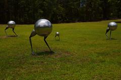 Long Point Vineyard 01 (Paul Hollins) Tags: longpointvineyard sculptures nikond750