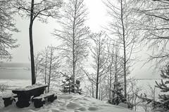 Лосево парк (Catstet) Tags: lake frost bare tree winter park bench boulevard birch snowing pine blizzard landscape losevo