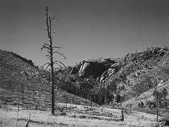 Goose Creek, Hayman Burn Scar (2018) (IntimateMuse) Tags: monochrome haymanfire landscape bw colorado forestfire