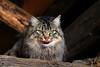 Bellissima e simpatica! (mariagraziaschiapparelli) Tags: gatto animali allegrisinasceosidiventa