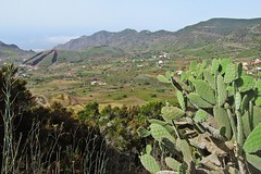 landscape of Tenerife :) (green_lover) Tags: landscape view tenerife canaryislands spain valley mountains opuntia cactus travels