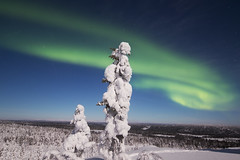 Northern lights - Aurores boréales (Mathieu Pierre) Tags: northern lights aurores boréales lapland canon 7dmark2 7dmarkii sigma14mmf18 sunset trees winter nature frost arctic hill finland nuit night sky