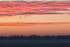 1000 Gänse und ein Reh (IIIfbIII) Tags: silhouettes gans reh deer galenbeckersee sun winter cold nature mecklenburg vorpommern wiese friedland galenbeck sonnenaufgang bird golden red rot heaven himmel canon