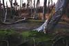 (photon meets eye) Tags: tree roots forest moss lichen beech nature green landscape wald wurzeln baum