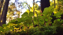 F98275FC-0D34-461D-AA93-22460C40D44F (atstrand) Tags: moss mose skogbunn frisk skog