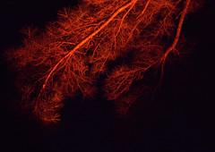 _MG_3114.CR2 (jalexartis) Tags: lighting ledlighting ledlights van fordtransitconnect night nightphotography