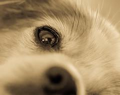 Please love me (risaclics) Tags: crazy tuesday theme contactmakemesmile60mm macro7dwjanuary 2018nikon d610risa dogsanimlasmonochromecrazy themecontact makemesmile 60mmmacro 7dw january2018 nikond610 risadogs animlas monochrome dogs
