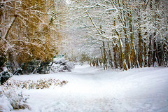 Snow .. (Julie Greg) Tags: snow nature weather cold park trees landscape road wood forest tree