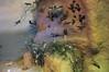 Diorama in Grigora Antipa Natural History Museum in Bucharest (cod_gabriel) Tags: diorama museum dioramă muzeu antipa grigoreantipa naturalhistory naturalhistorymuseum bucuresti bucureşti bucharest bucarest bucareste bukarest boekarest birds împăiate taxidermy taxidermie stuffed stuffedbirds