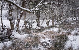 P1230488-1 - Beautiful Snow