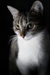 12/365 [cat 3]