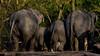 Olifanten | Diergaarde Blijdorp Rotterdam (Marjan van de Pol) Tags: 5dmarkiv blijdorp canon canon5d nederland rotterdam fave favorite faved zoo