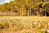 Paisaje para dibujar (su-sa-ni-ta) Tags: paisajes dibujos nature naturaleza cordoba argentina flores colores vacaciones agradable