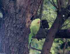 keoldeo-bharatpur-bird-sanctuary-1-3 (99) (jjamwal) Tags: birds birdwatching travel tamron nikon wildlife nature animals india