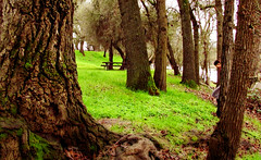 Walking by the river (Dawna Kay) Tags: stillman magee california san joaquin county