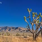 Mojave Preserve 5653 D thumbnail