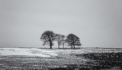 Winter Trees (l4ts) Tags: landscape derbyshire peakdistrict whitepeak snow winter longstonemoor trees heather moorland silhouette blackwhite monochrome