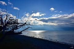 Goûter l'instant (Diegojack) Tags: vaud suisse paysages léman embouchure vuachère danantou oiseaux canards mouettes lumière contrejour ouchy