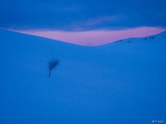 Arctic afternoon. (veronika.sund) Tags: storlitinden februar2018 vinterlandskap vinterlys winter winterwonderland vinter pink rosa arctic blue view troms norway tree olympus olympusomd