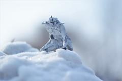 Your duty is over, brother (Nikita Vasiliev) Tags: origami origamiart paper paperart morisuekei clone clonetrooper starwars warrior pain snow winter