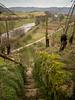 Die Staffeln durch den Weinberg mit Blick auf die Enz (hundertblumen) Tags: naturschutzgebiet felsengärten mühlhausen enz treppen staffeln weinberg