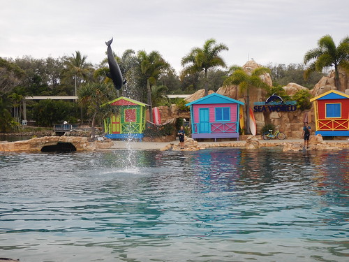 Sea World Dolphin Show
